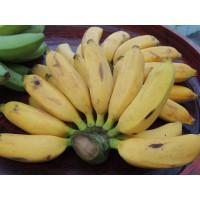 กล้วยน้ำไท ตำรับยาลูกแปลกแม่