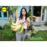 หน่อกล้วยงาช้าง